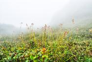 Stock Photo of field with misty on mountain