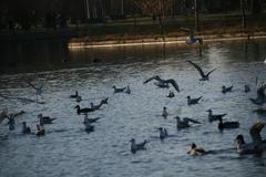 Wild Birds Arrived In The Lake In The Park. Stock Photos