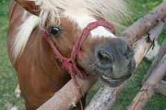 Pony Begging For Attention And Love - stock photo