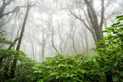 tree forest in autumn season of thailand - stock photo