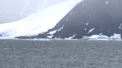 Orca hunting Antarctica Stock Footage