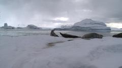 Seals on berg, Antarctica Stock Footage