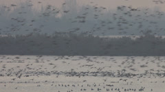 Ducks flying at dawn - stock footage