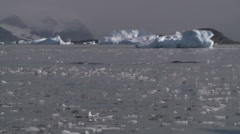 Brash ice with bergs behind, Antarctica Stock Footage