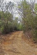 Stock Photo of calm road, india