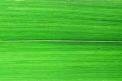 close up green bamboo leaves background - stock photo