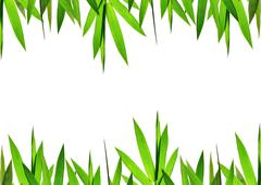 Green bamboo leaves background Stock Photos
