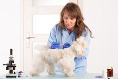 woman vet holding a dog - stock photo