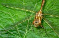 Stock Photo of brown dragonfly on leaf