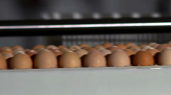 Stock footage food chicken processing factory Eggs factory Stock Footage