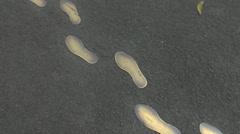 jose rizal foot prints - stock footage