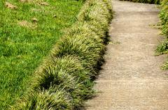 Concrete garden path borderd by plants and lawn Stock Photos