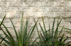 Green iris leaves against precast concrete wall Stock Photos