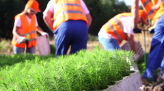Planting tree seedlings - stock footage