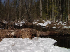Snow Covered Stream - stock footage