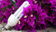 Purple flowers and energy-saving light bulb Stock Footage