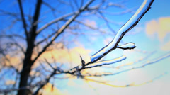 Ice on Frozen Branch Timelapse Winter Storm Stock Footage