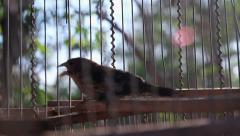 Bird in a cage. Stock Footage
