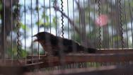Stock Video Footage of Bird in a cage.