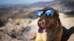 Dog with sunglasses - stock footage