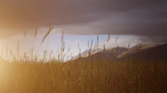 Sunset in slowly moving grass with mountains in the distance Stock Footage