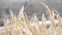 Frozen grass Stock Footage