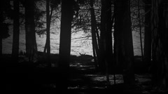 Eerie silhouette of children riding bikes through a forest Stock Footage