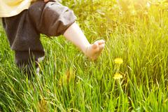 Bare foot of child over dandelion Stock Photos