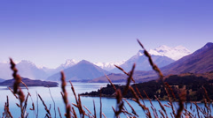 Sunset of snow capped mountains with reeds in the foreground. Stock Footage