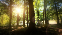 Sunshine filters through forest glade as camera pans around a tree. Stock Footage