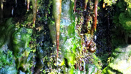 Stock Video Footage of Stalactites and mosses. Green nature.