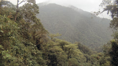 Mist rising through cloudforest in the foothills of the Andes Stock Footage