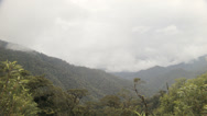 Stock Video Footage of Mist rising through cloudforest in the foothills of the Andes