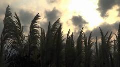 marsh reeds - stock footage