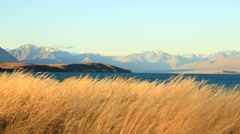 Grass waving in the wind with mountains in the distance. Stock Footage