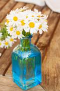daisy flowers posy - stock photo