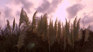 Stock Video Footage of marsh reeds