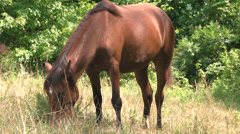 Horse grazing in the sunlight Stock Footage