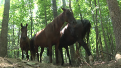 A few horses in the woods low angle Stock Footage