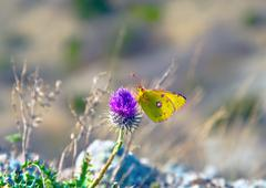 Butterfly sits on a flower Stock Photos