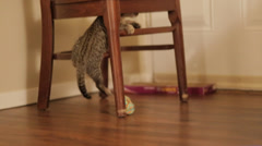 Kitten plays with toy Stock Footage