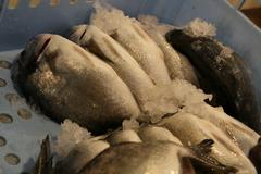 Fresh fished sea bream Stock Photos