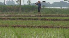 Pan up from a rice paddy field to a farmer in rural China Stock Footage