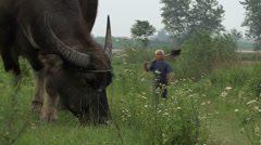A large bull and farmer in rural China - stock footage