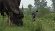 Stock Video Footage of A large bull and farmer in rural China