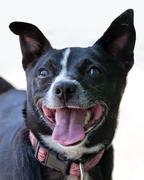 Fox terrier cross Stock Photos