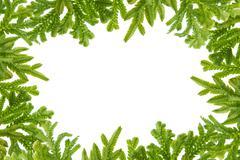 green fern  leaves frame - stock photo