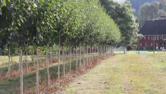 Tree Row and Barn Stock Footage