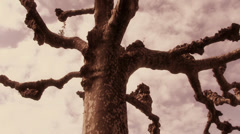 Old and wise. Gothic tree, fantasy mood. Stock Footage