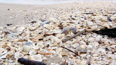 Group shell cover on the beach Stock Footage